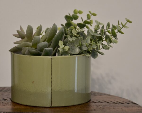 Green Coffee Tin with Succulents 8x10 Back