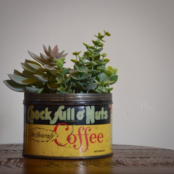 Vintage Chock Full O Nuts Coffee Tin Yellow Green Red with Succulents Feature Image