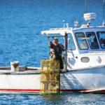 lobsterman casco bay