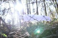healing_woods
