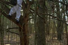 tree_climb