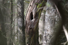 whispering_tree