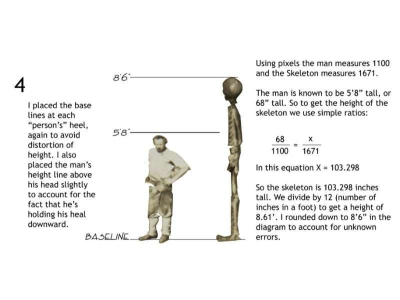 8 Foot Skeleton - Computer Height Comparison