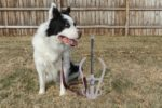 all-tie-pet-anchor-animal-dog-tie-out-insure-safety-portable-ground-anchoring-device