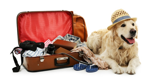 """Don't pack everything """"but the kitchen sink"""""""