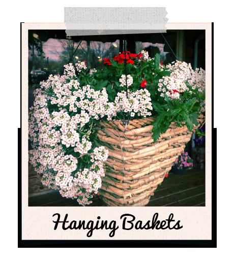 Flowers in basket from Powers Farm Market