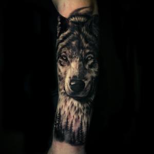 Best Black & Gray wolf Portrait in Los Angeles Matt Hildebrand