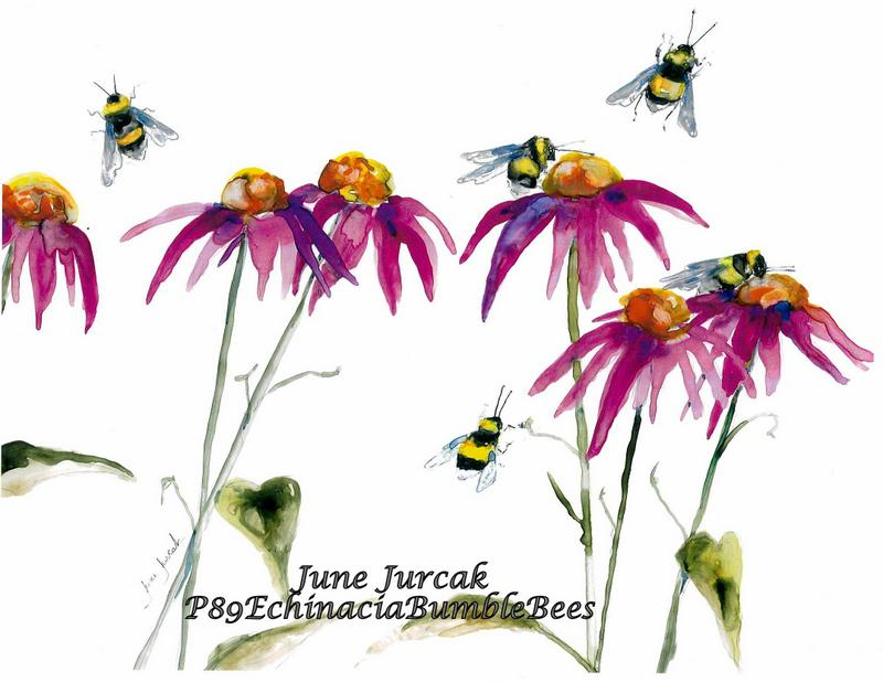 P89 Echinacia Bumble Bees