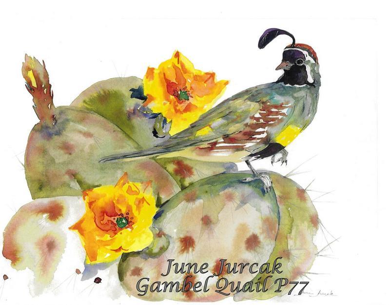 jj2016-12 gambel quail p77