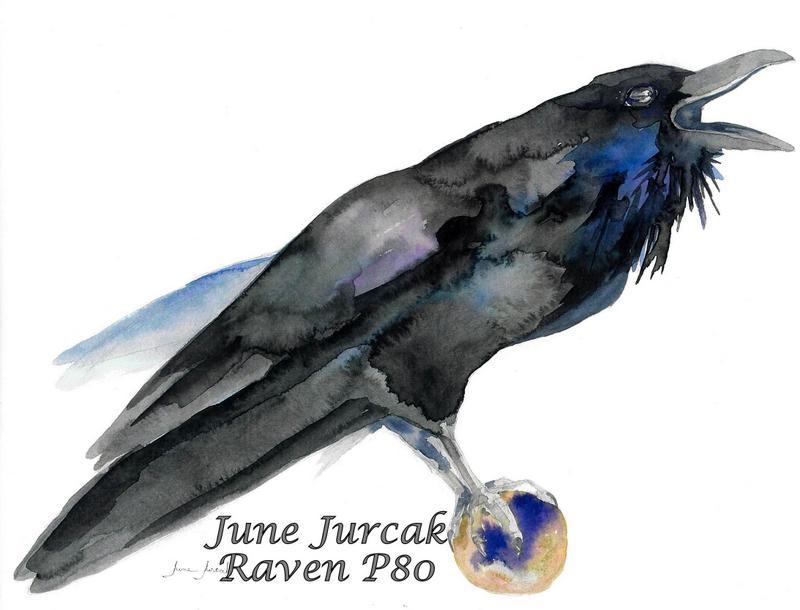jj2016-13 raven