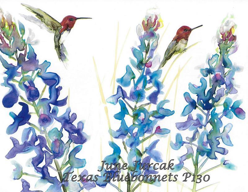 jj2016-21 texas bluebonnets and hummingbirds p130