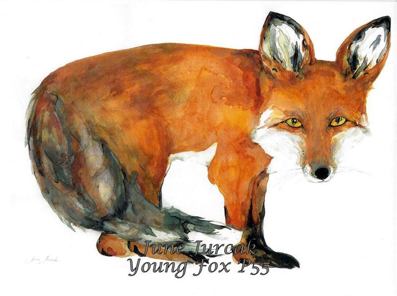 jj2016-4 p55 fox