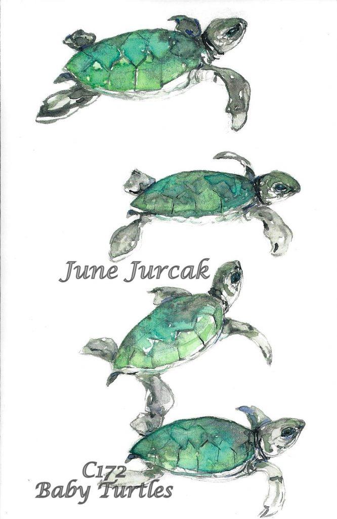 C172 Baby Turtles