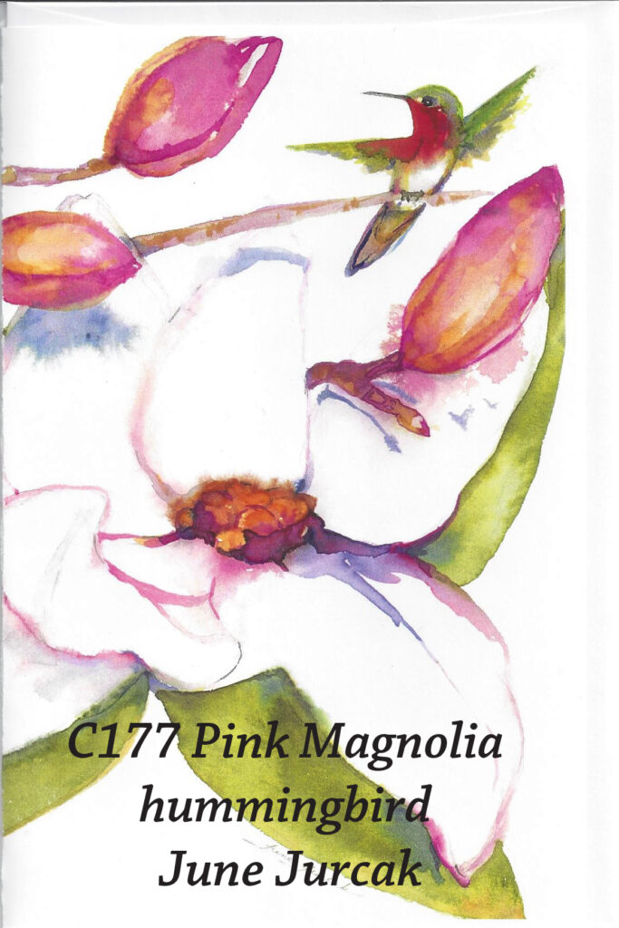 c177_pink_magnolia_hummingbird_june_jurcak