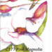 c177_pink_magnolia_hummingbird_june_jurcak thumbnail