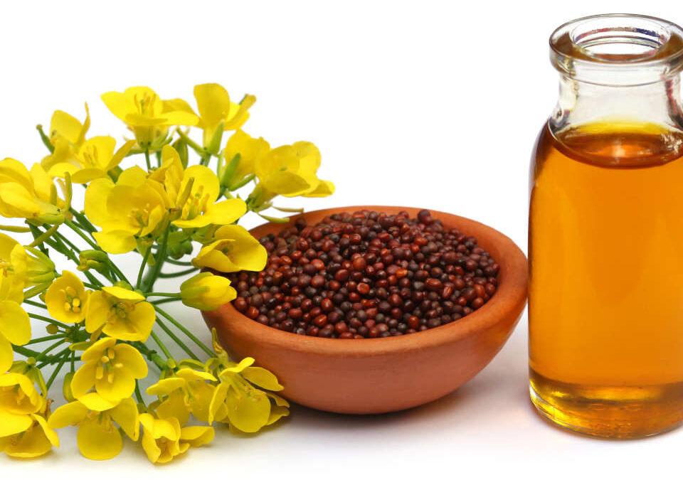 Mustard as Food and Medicine