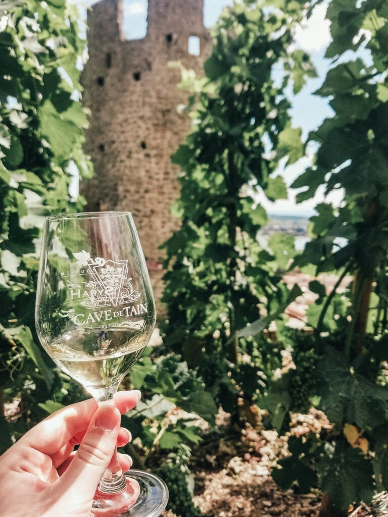 Cave De Tain Wine Tasting in Vineyards of Tain-l'Hermitage