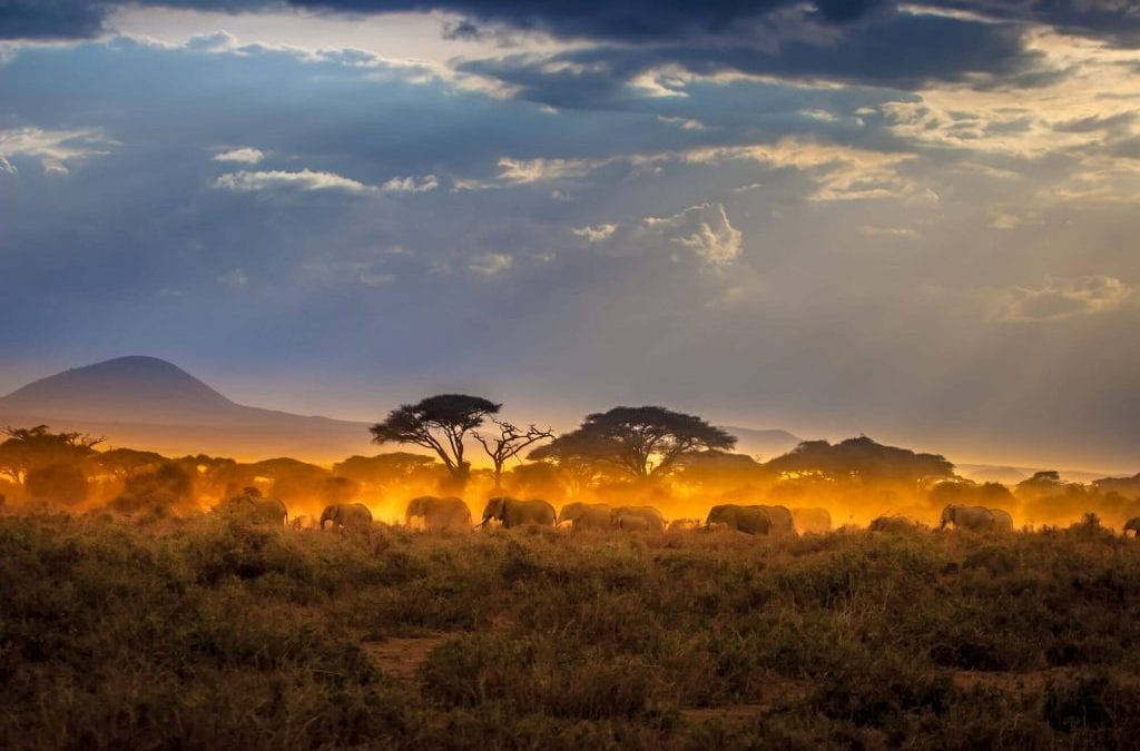 Nine Perfect Days on a Kenya Safari
