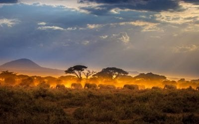Nine Perfect Days on a Kenya Safari