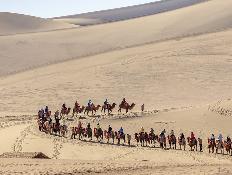 River Oaks Travel Home Page Camels
