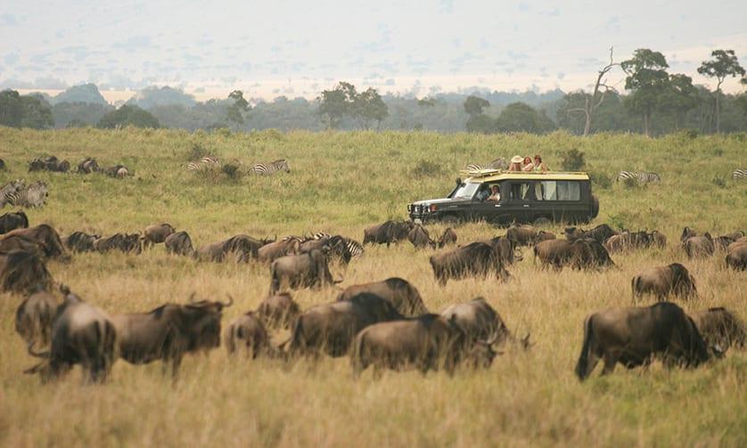 Wildlife Safari by Private Jet