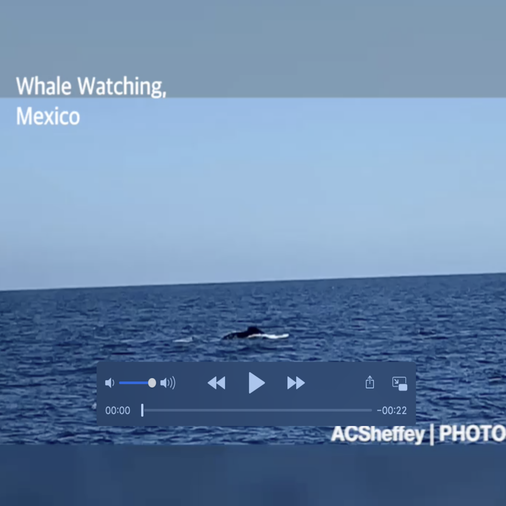 whale watching in January