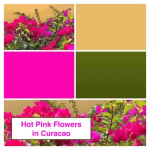 Pink Bougainvillea Flower Art