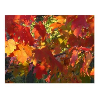 This image has an empty alt attribute; its file name is Autumn-Foliage-Boston-MA-postcard.jpg