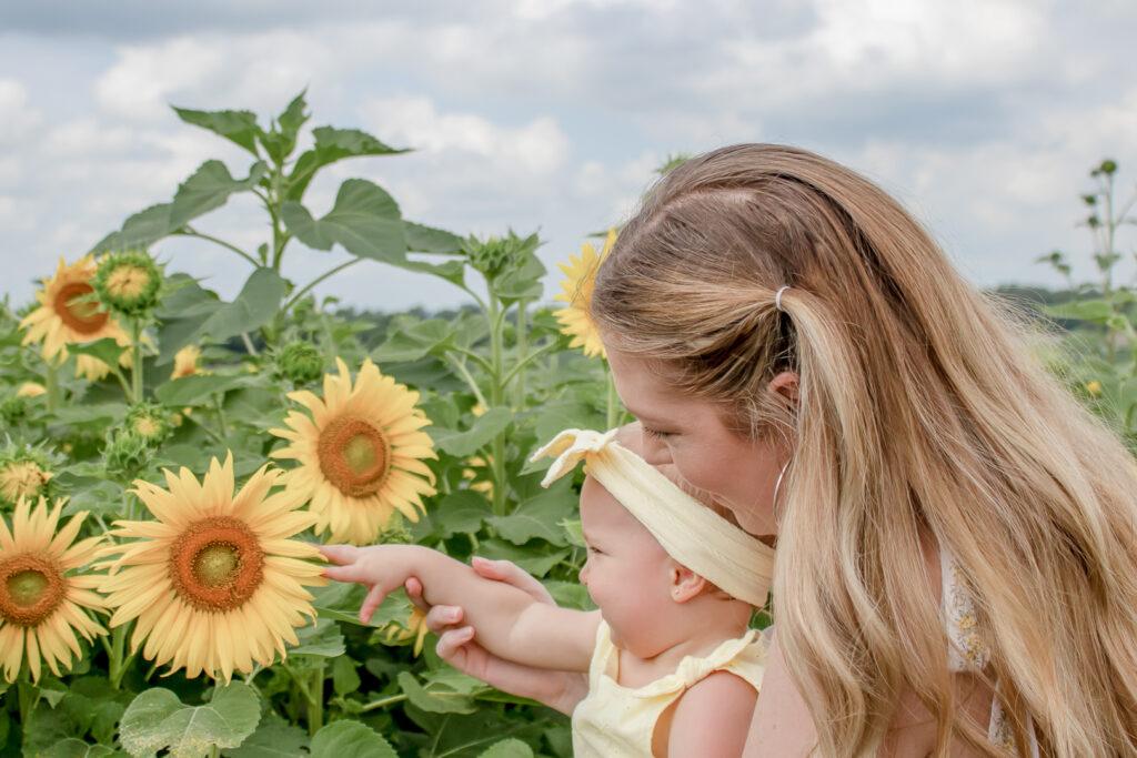 Sunflower Fields 3