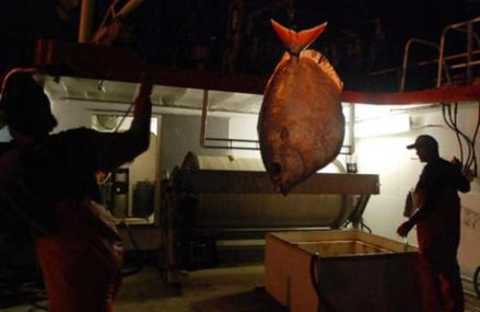 Hawaiian seafood caught by foreign crews confined on boats