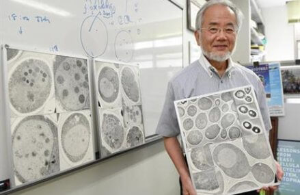 Japan's Ohsumi wins Nobel for studies of cell 'self-eating'