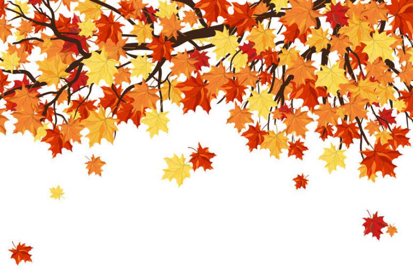 Autumn Maple Tree Leaves Backdrop