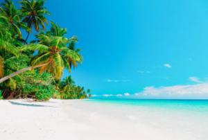 Tropical Paradise Beach Backdrop