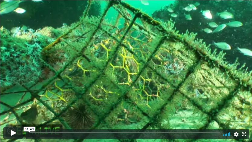 Ghost Fish Traps Video