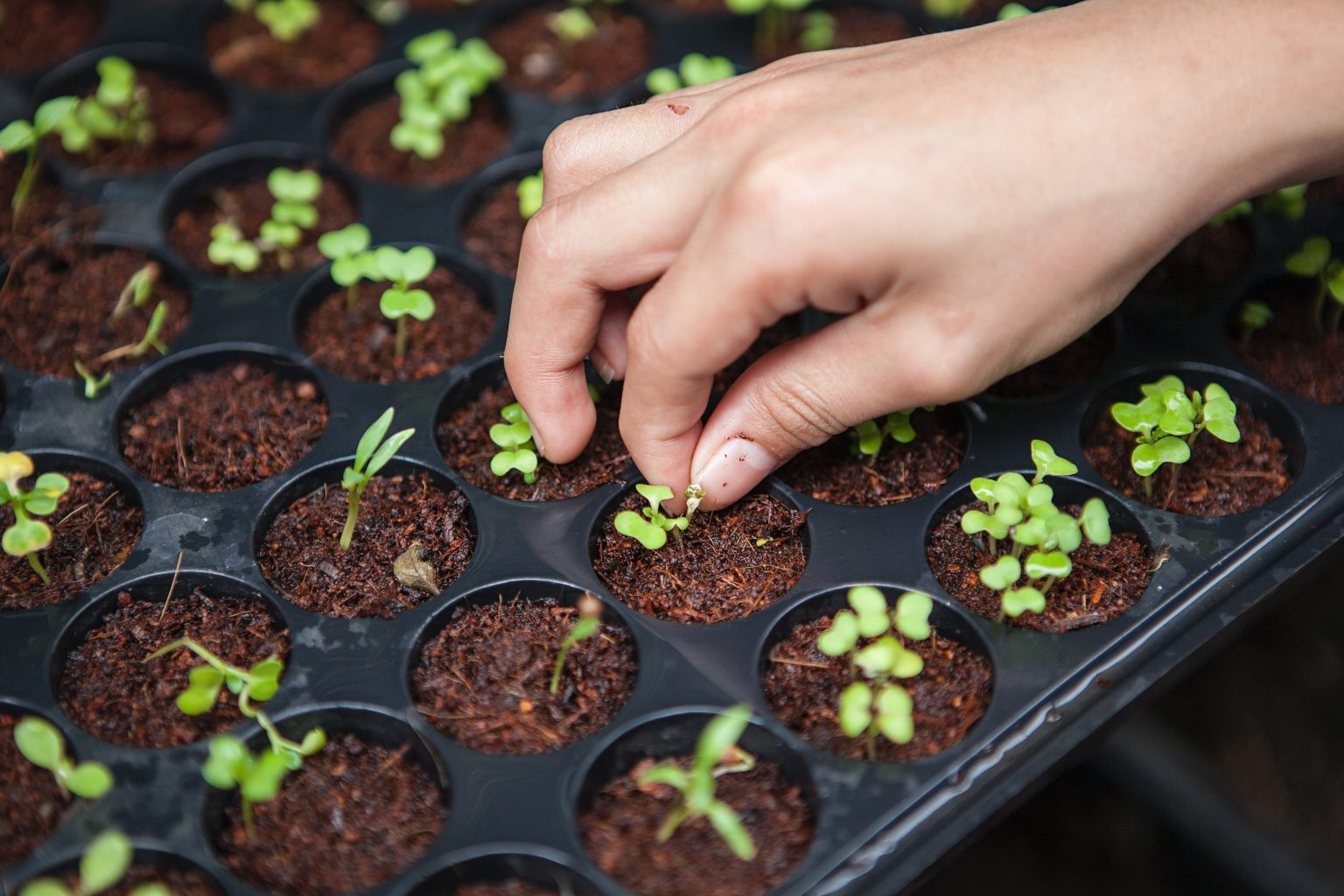 4 Reasons why Urban Farming is the future of agriculture