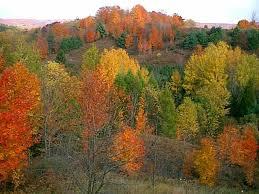 Maple hillside