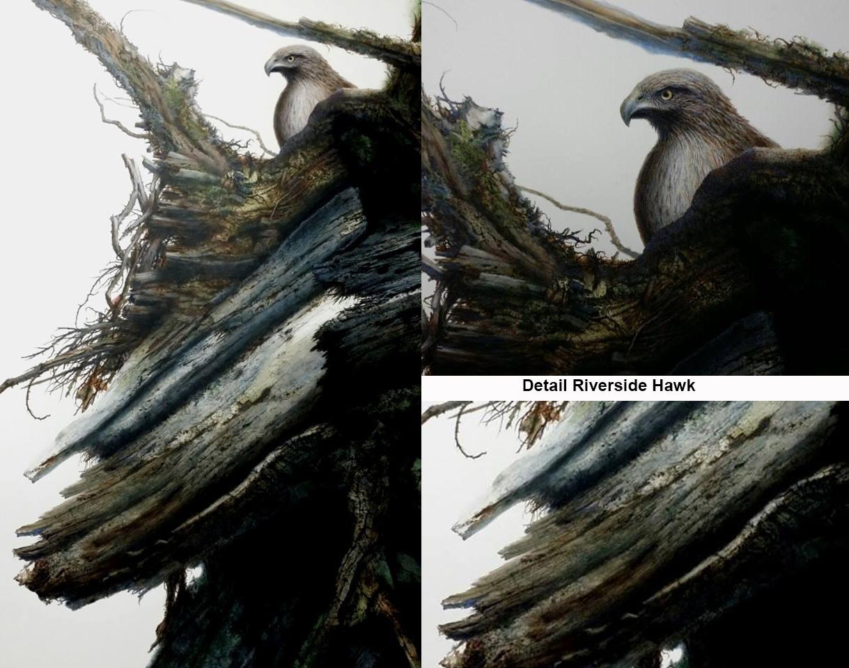 Riverside_Hawk_with_detail