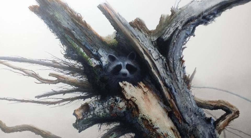 Raccoon in hollow tree