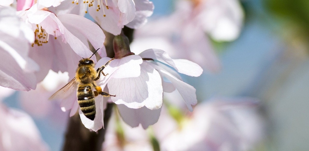 The Truth About Pollinators