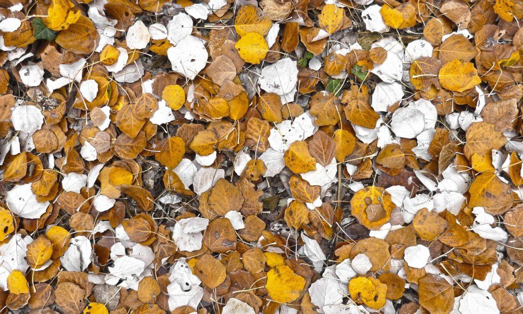 leaf-1107966_1280