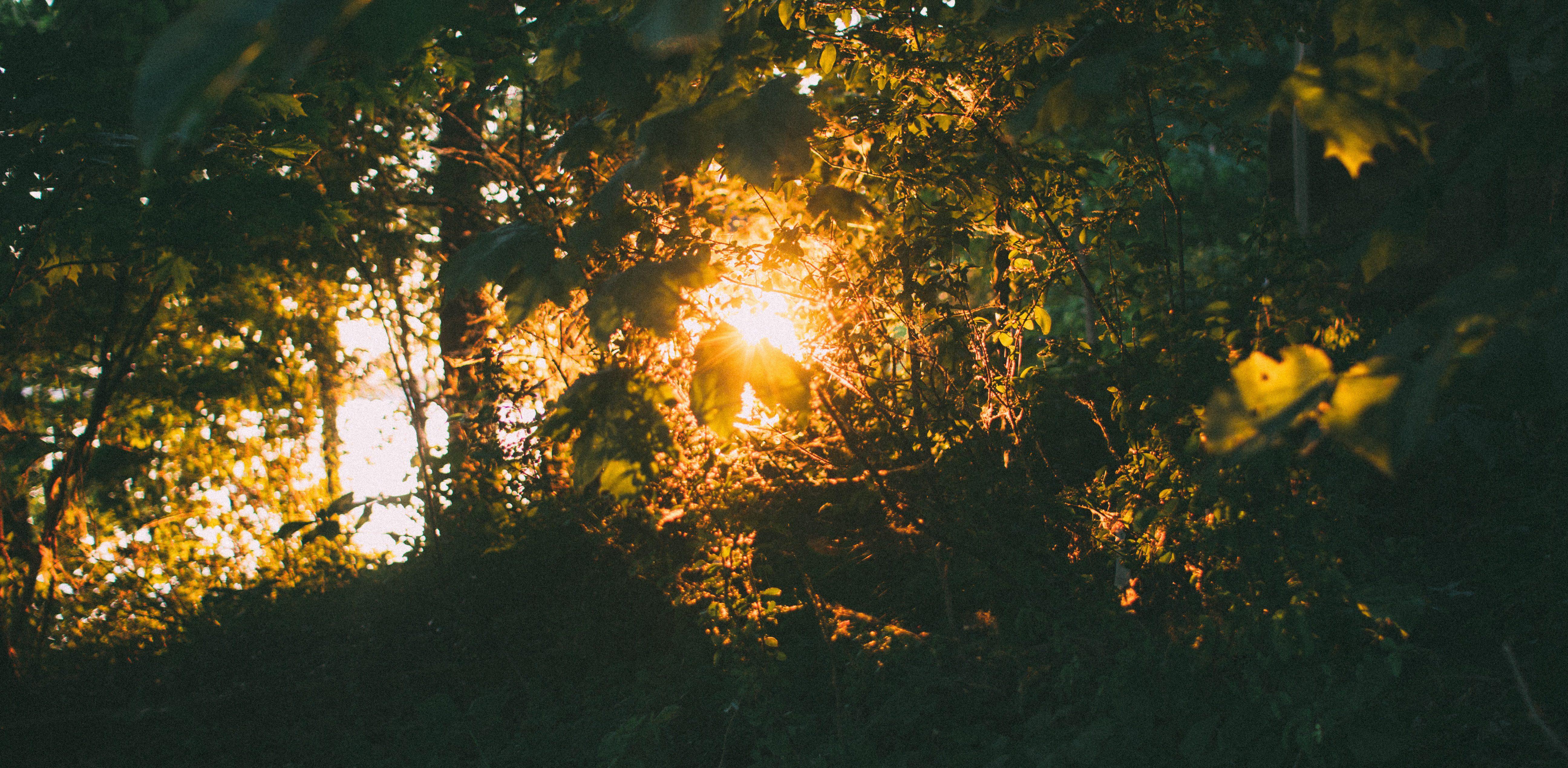 Eternal Summer by Ella Hassall