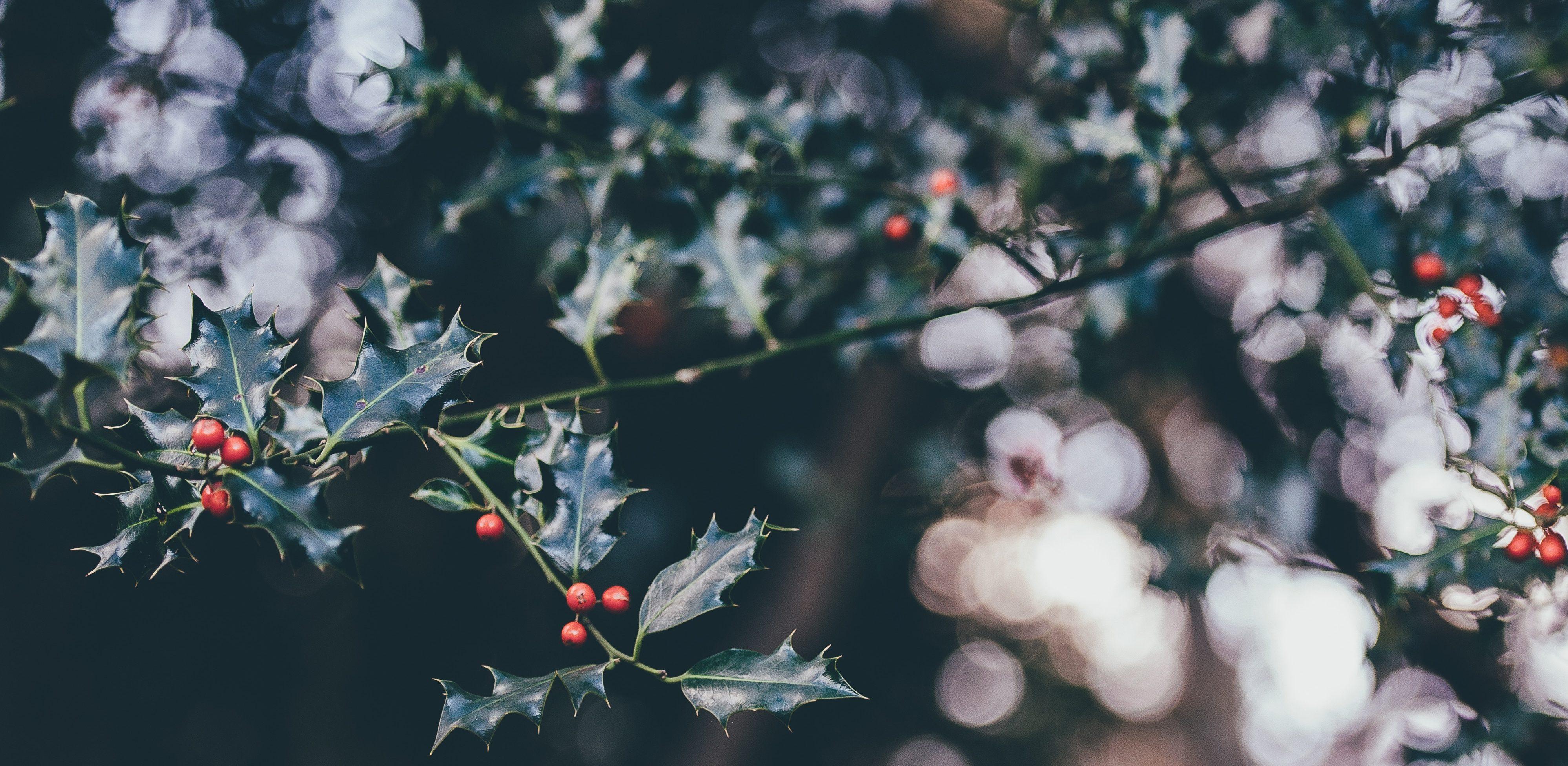 December Writing Challenge: Honorable Mentions — Andreea Sandu, Aleksandra Markovic, Rida Ahmed, and Ashley
