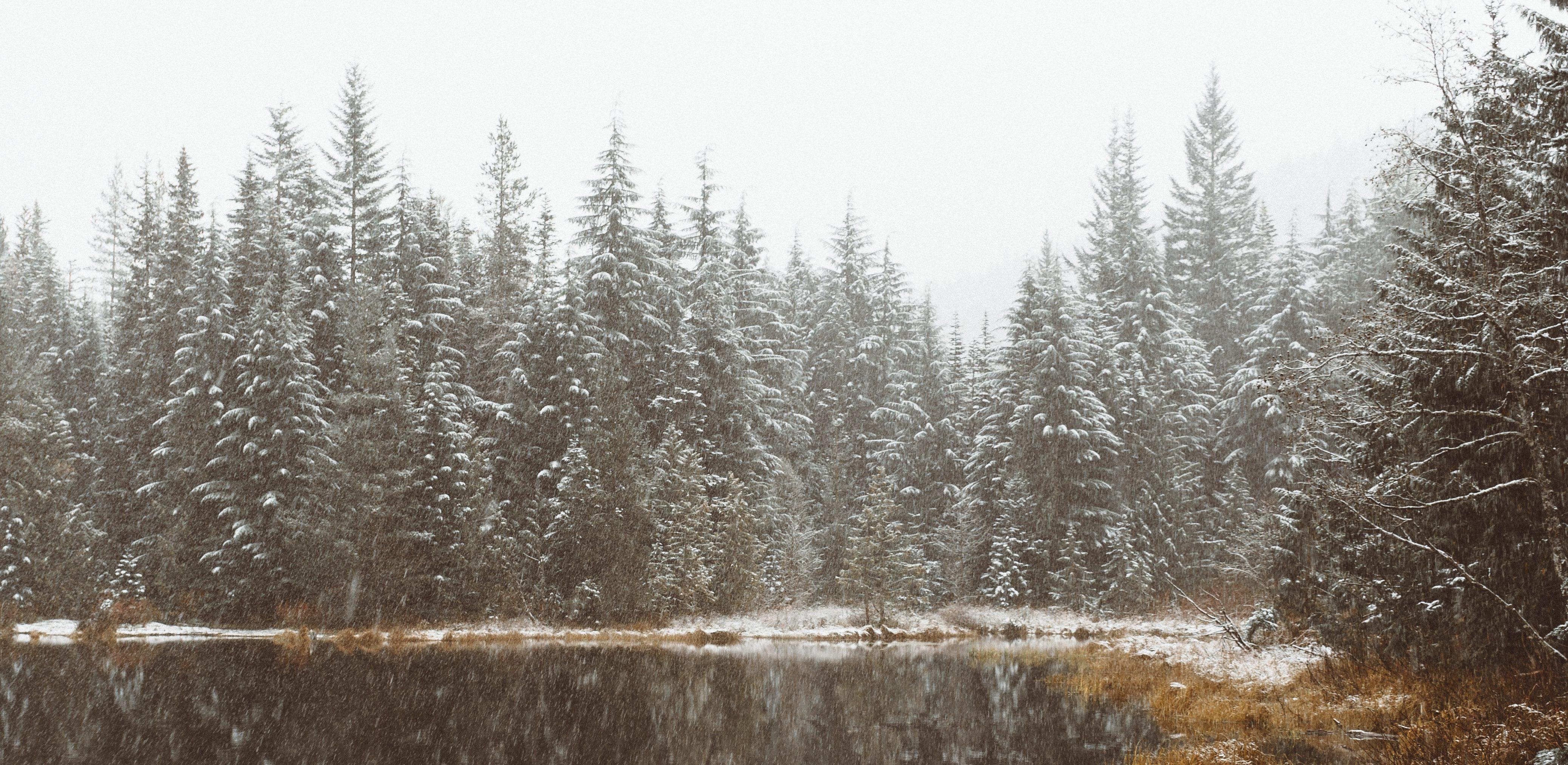 Forbidden Snow by Alanna Gray