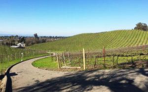 JW_vineyards_01