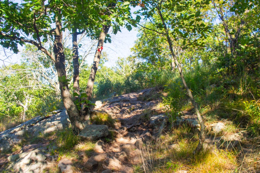 Nature Photography steep hiking trail