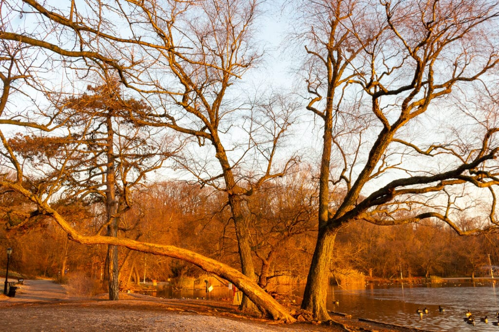 Beautiful Nature Photo of a Brooklyn Winter Tree at Sunrise