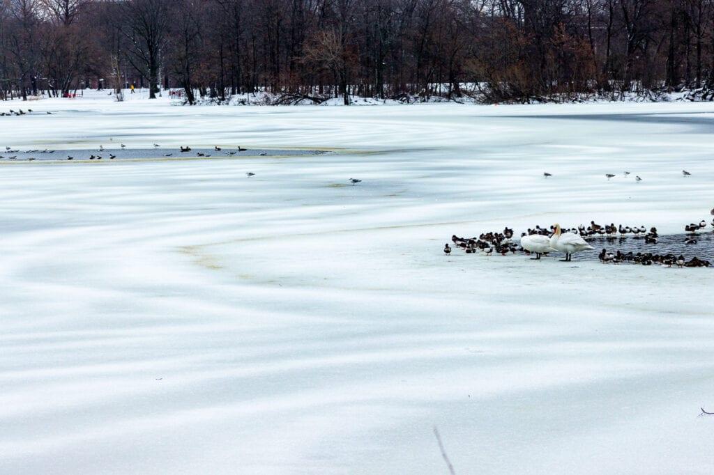Winter Lake Photography