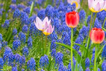 Spring Flower Macro Ideas