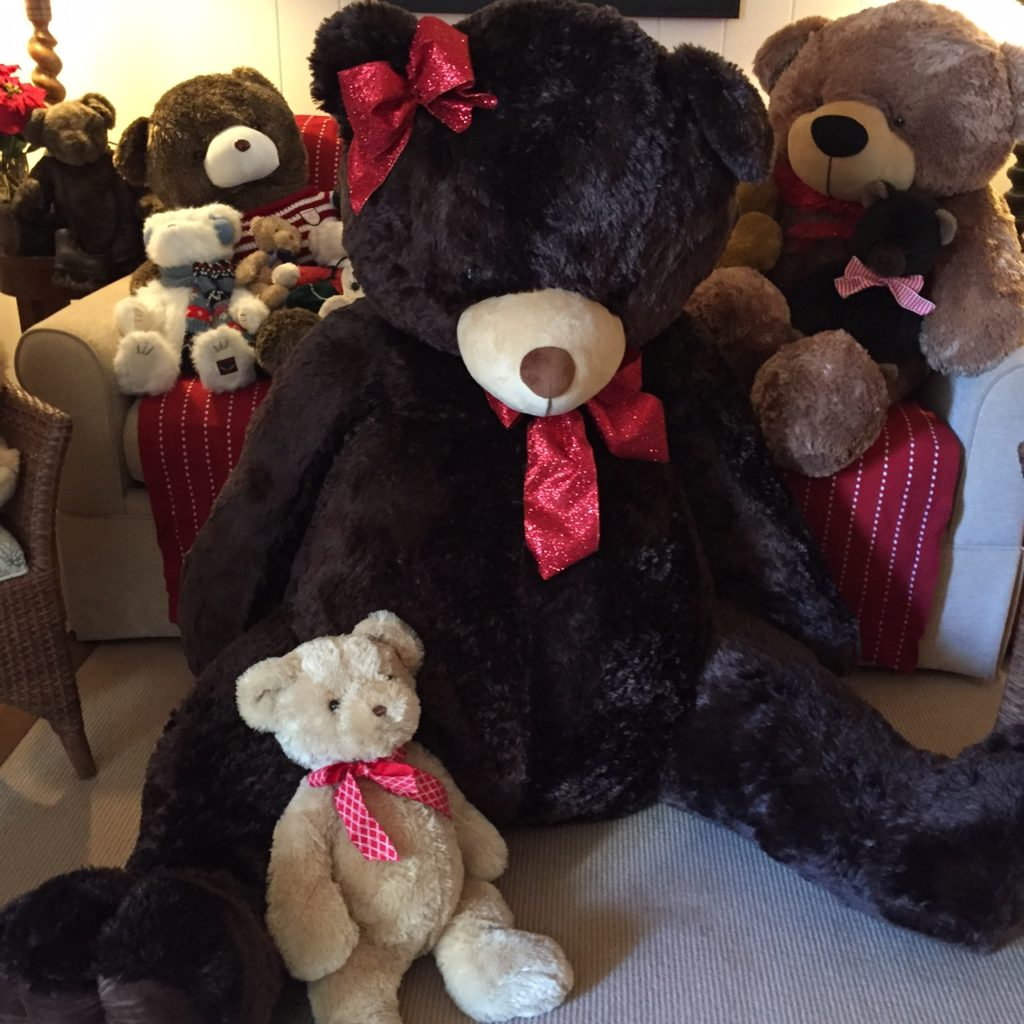 The New Big Bear Is Named Aquinas or Quinn For Short - She Joins The Martha's Vineyard Teddy Bear Suite Fundraiser
