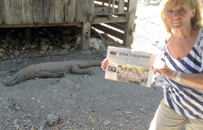 During Kathy Myles' three week trip through Indonesia, she and her Stow Independent got up close to a Komodo Dragon on the island of Komodo.  This is a UNESCO World Heritage Site which has attracted scientists from around the world.  Described as a monitor lizard, the scaly giants range between 6 and 10 feet long.  A Ranger was standing close by for protection.